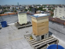 Rooftop beehives, Brooklyn New York